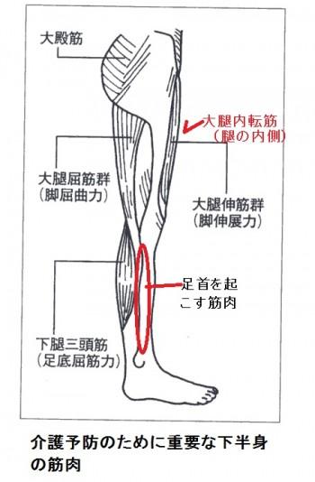 介護予防と運動で鍛える部位